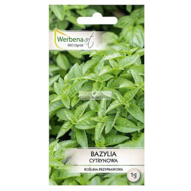 Bazylia Lemon 100 g