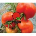 Pomidor tunelowy YIGIDO F1 a' 250 nas.